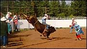A man riding a bull in a rodeo arena.