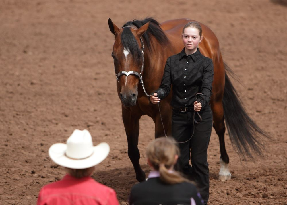 A young woman walks next to her horse in the arena at the 2014 Klickitat County Fair.